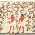 Come mangiavano i nostri antenati? Diamo i voti alle loro diete.