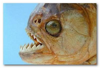 Fish Spa Pedicure Nj