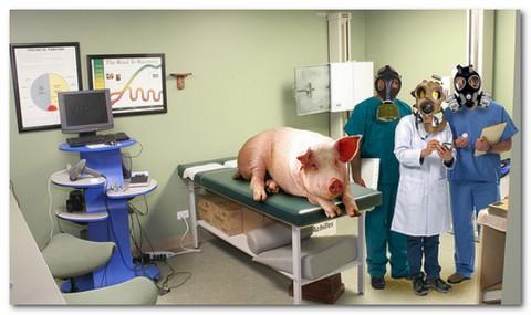 influenza-suina